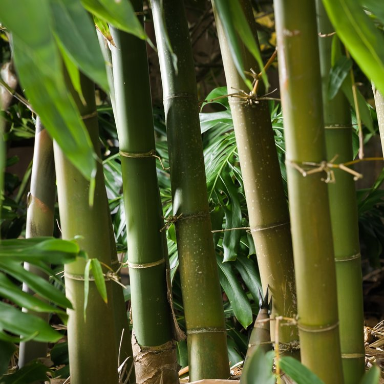 Bamboo Removal - Find out more