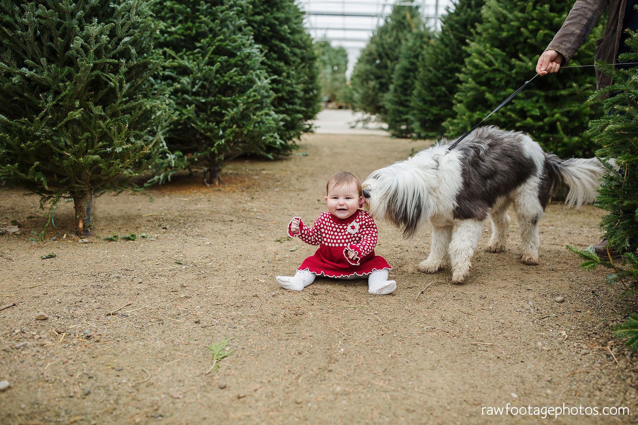 london_ontario_family_session_greenhouse-train_bridge-baby_girl-dog-raw_footage_photography024.jpg