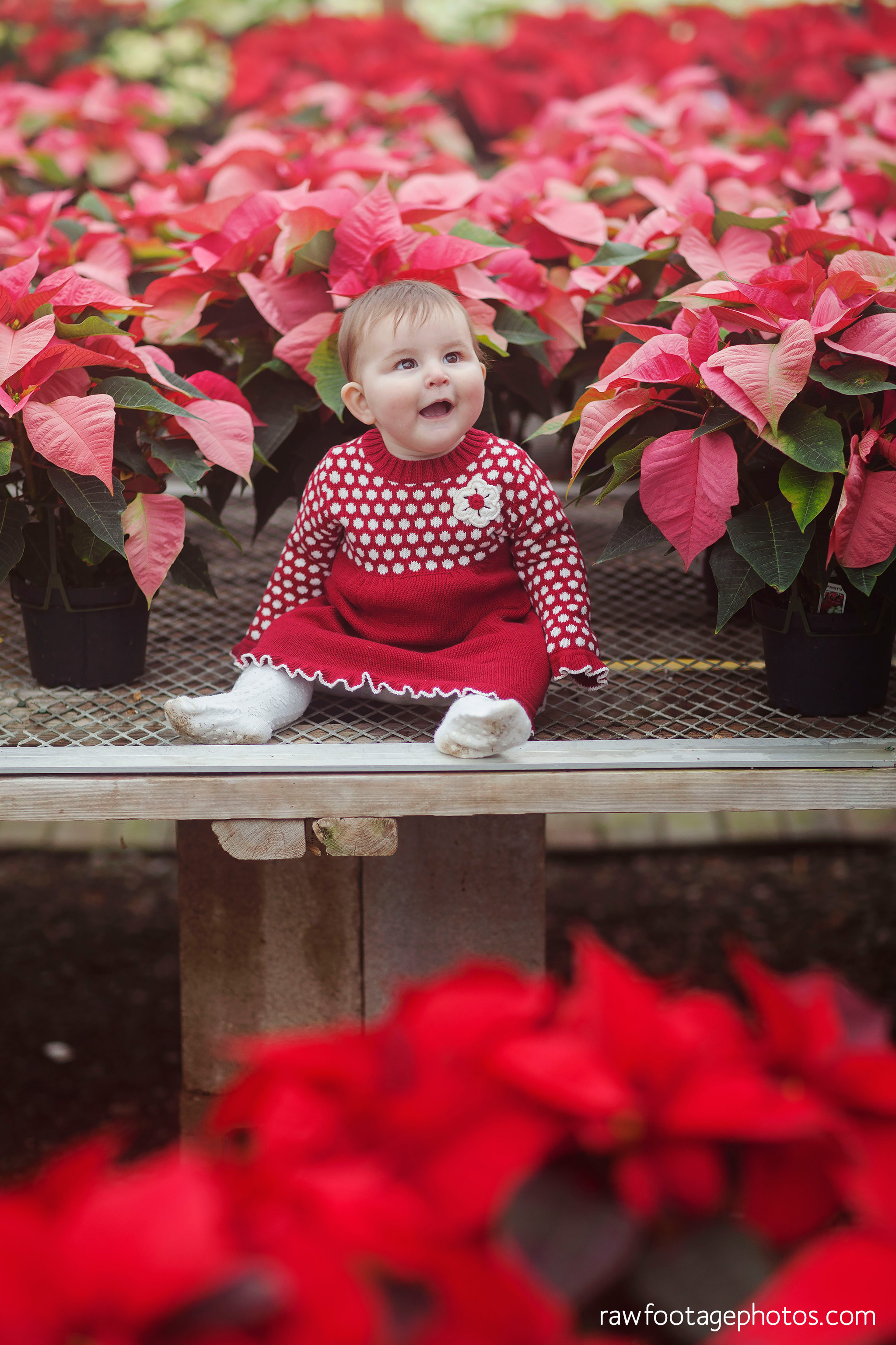 london_ontario_family_session_greenhouse-train_bridge-baby_girl-dog-raw_footage_photography030.jpg