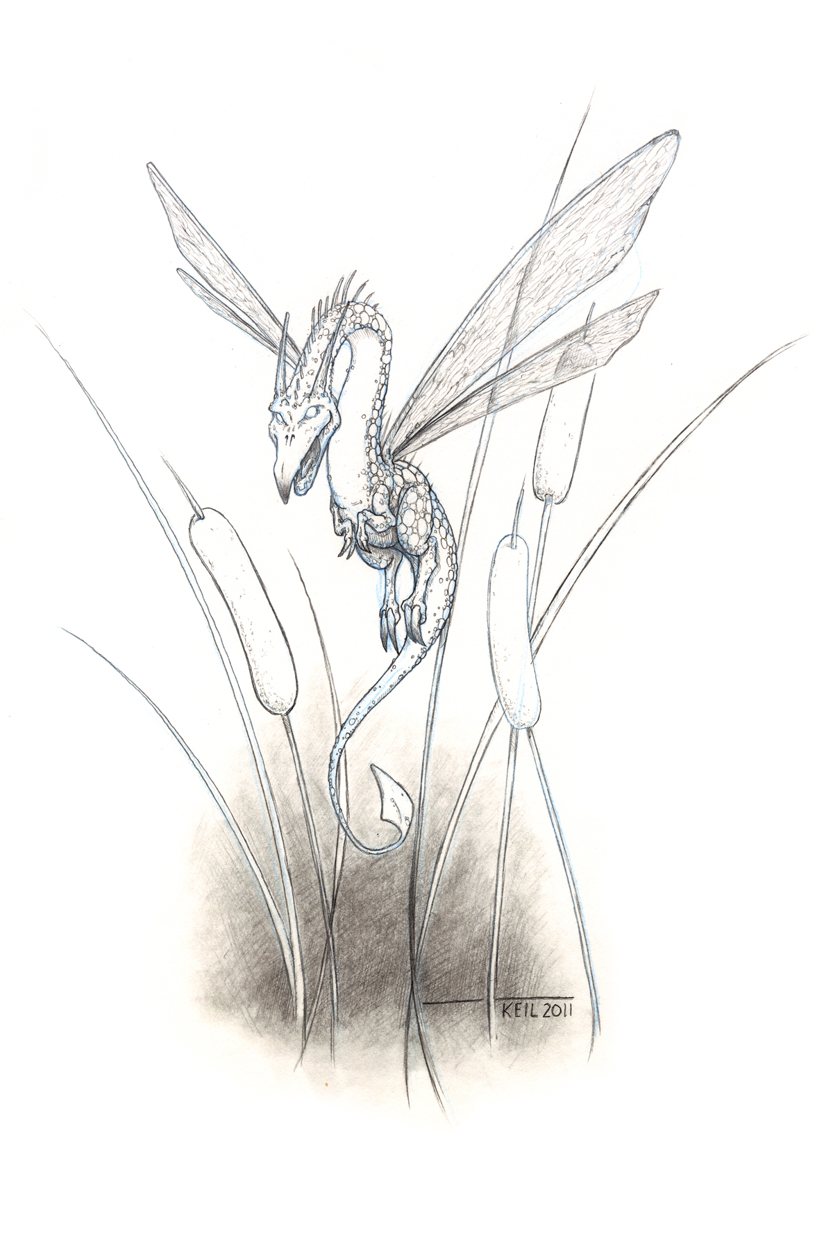 KDI-Dragonfly.jpg