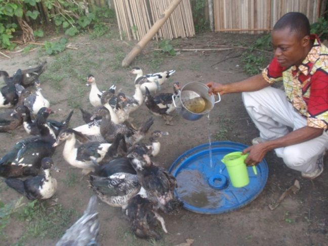 Selling duck eggs can pay for school tuition and uniforms.
