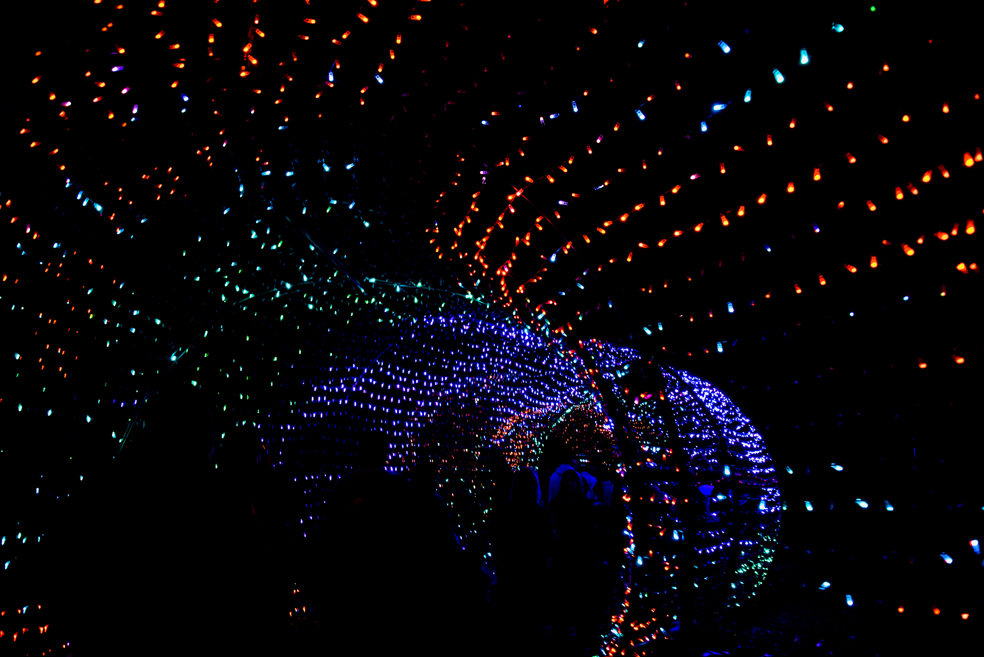 zoolights1_1low.jpg