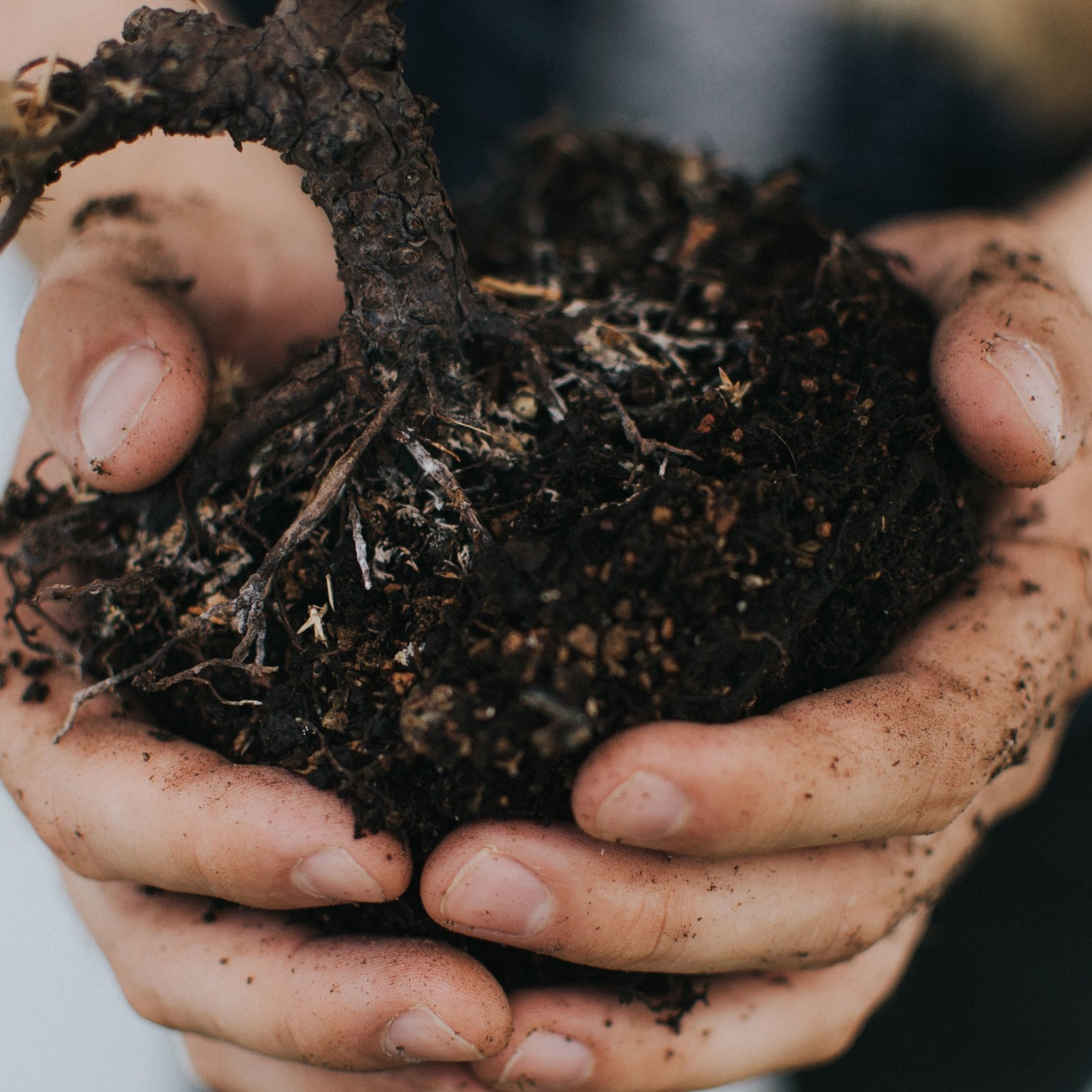 Compost (Noun): - Decayed organic material, such as of leaves and grass, used to improve soil especially for growing crops.