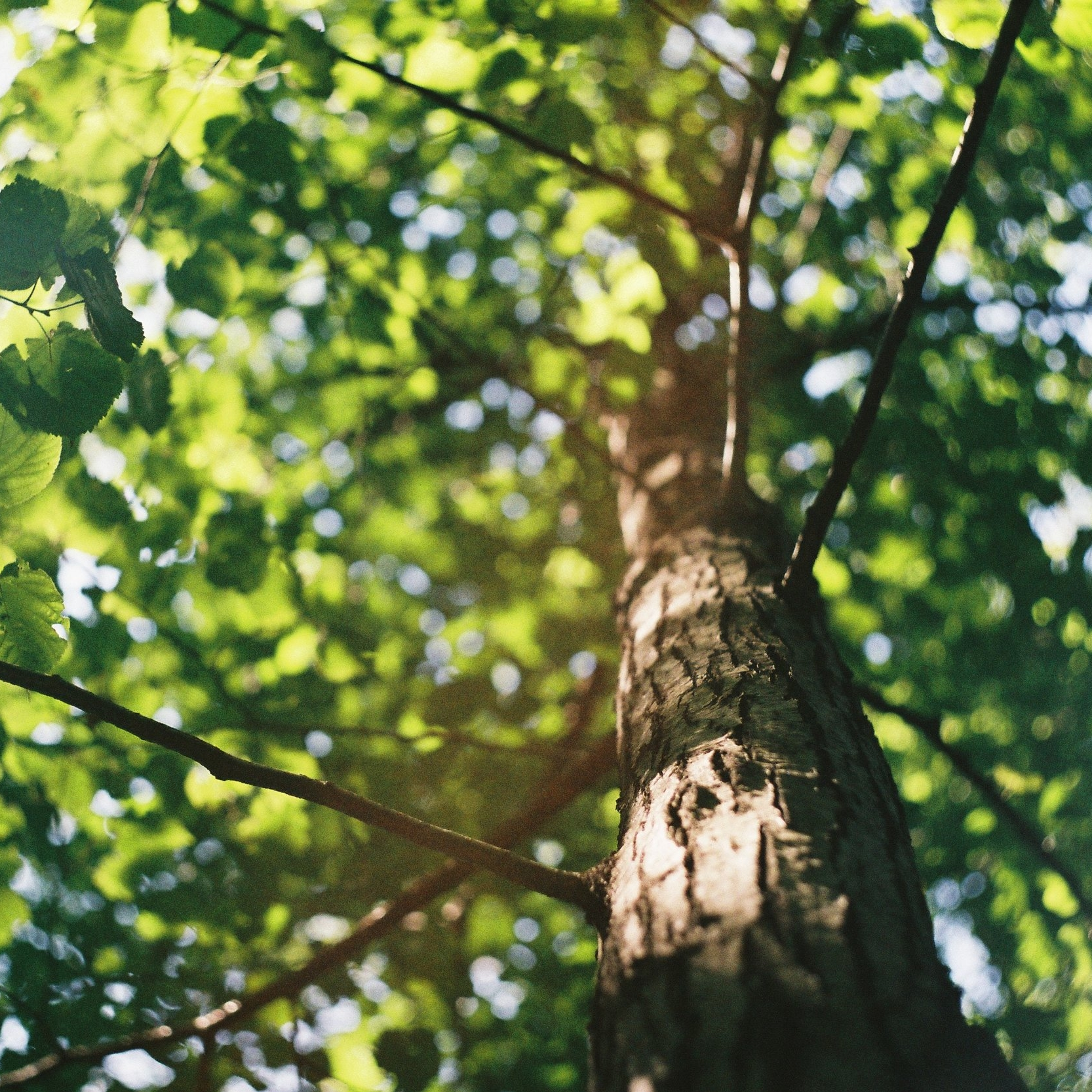 550,000+ - Paper Culture has donated more than 550,000 trees to date.