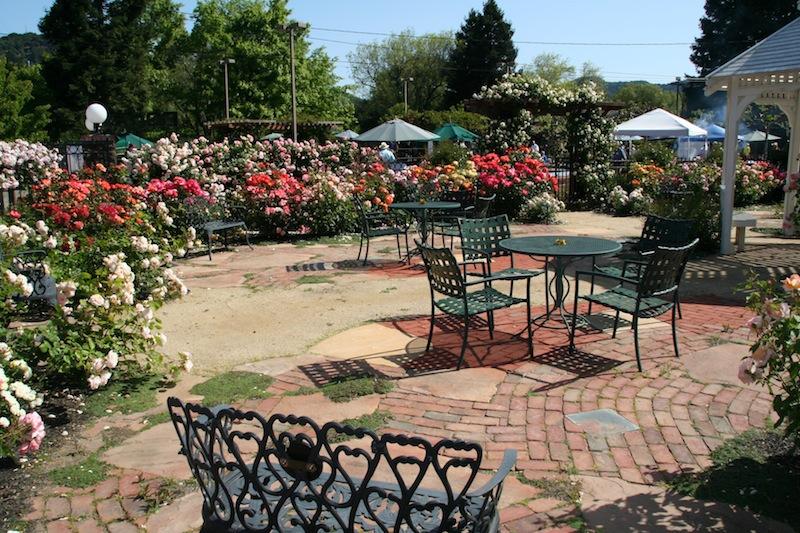 rose garden 4.jpg