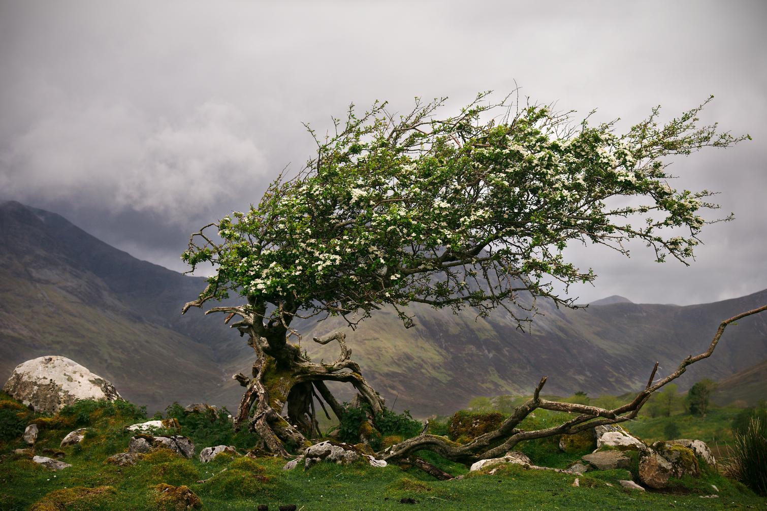 On the road to Elgol, Isle of Skye