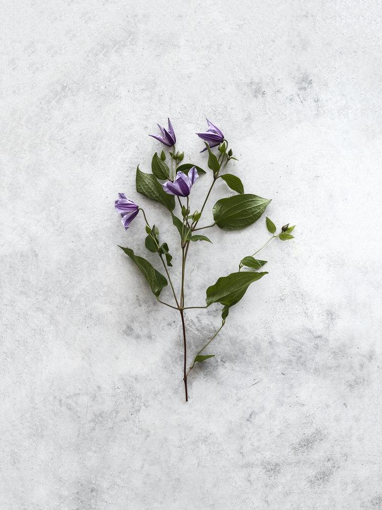 Florist0089.jpg