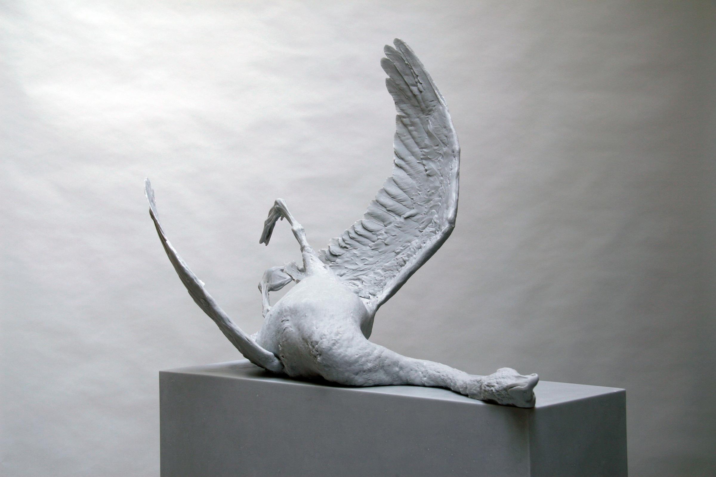Daphne Wright. Swan, 2007.