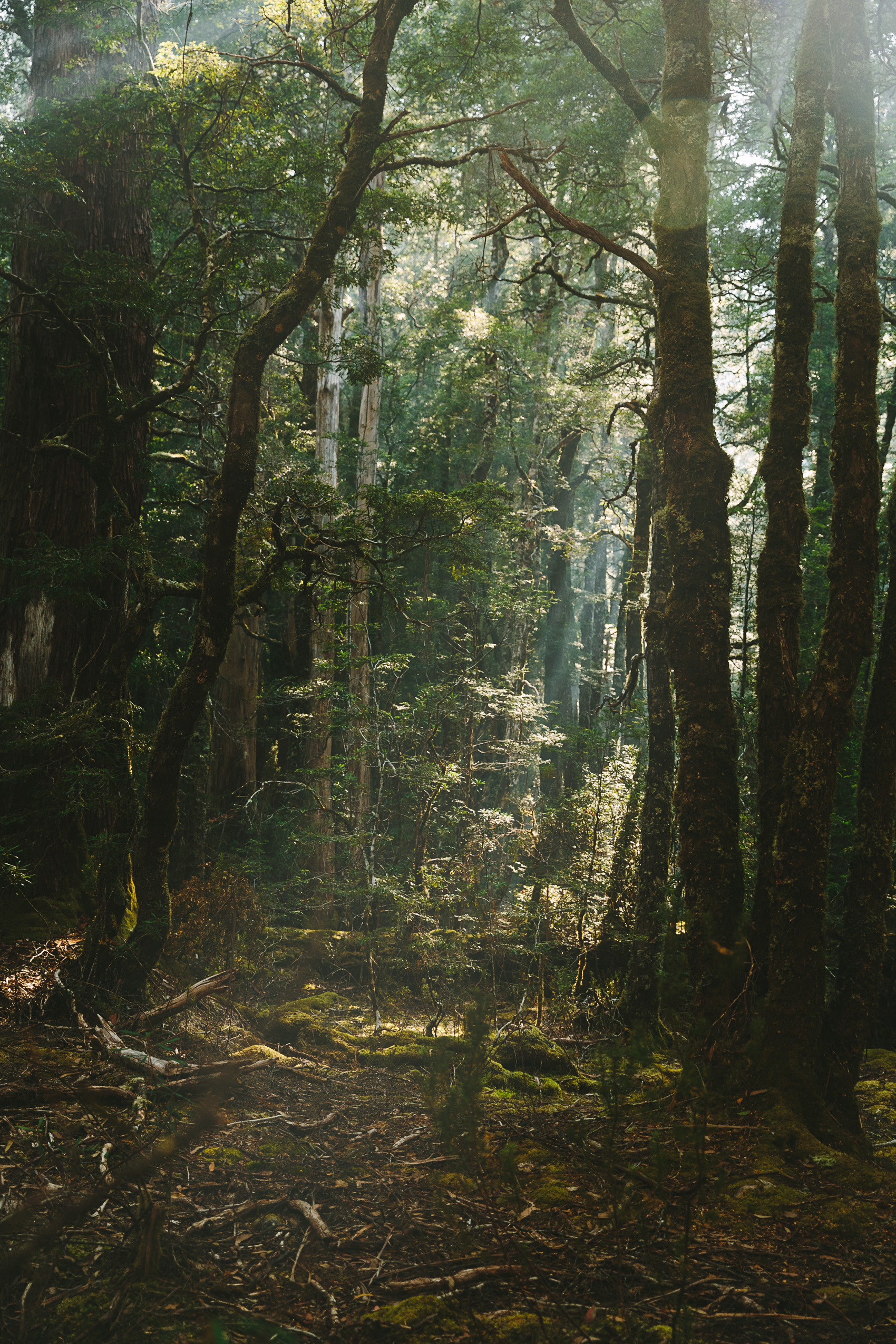 A forest on Tasmania