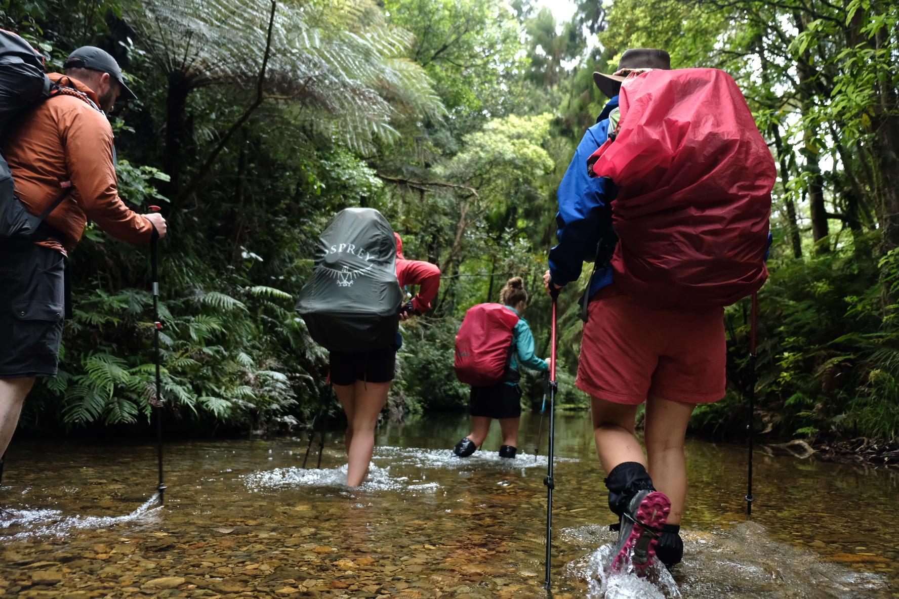 Tramping the Russel forest track