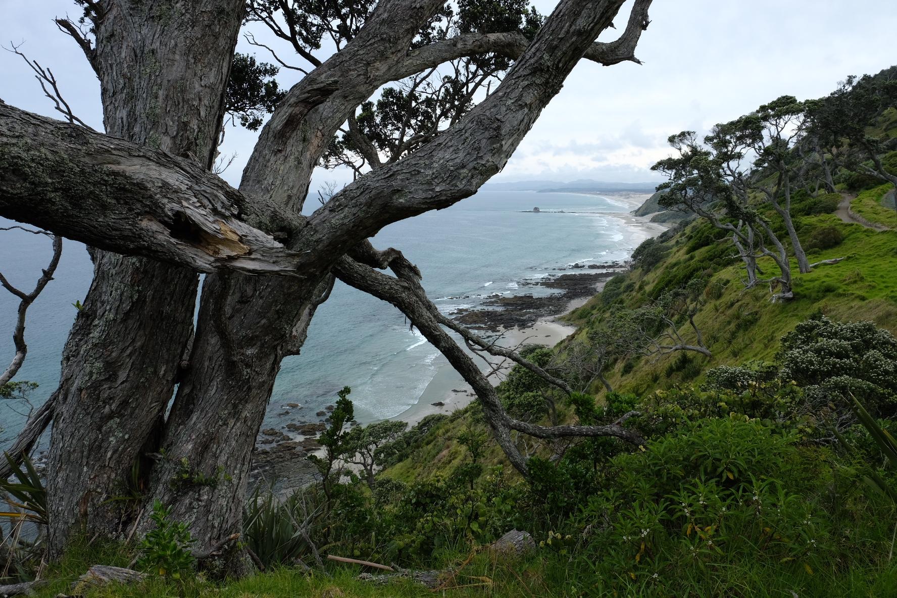Views along the Mangawhai cliffs path