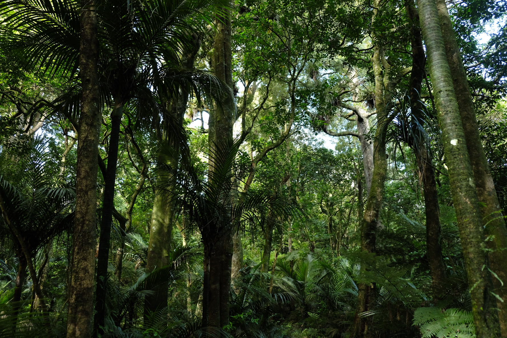 Beautiful forests in the Hakarimata range over Ngaruawahia