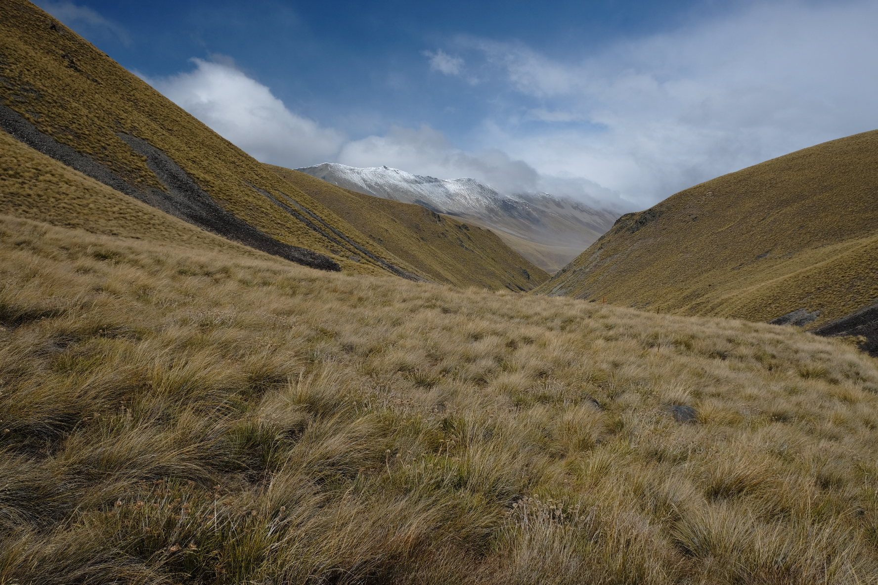 Camp stream bush bashing. According to the Otago Tramping Club it's actually the bush that does the bashing