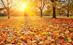 white-chinese-autumn