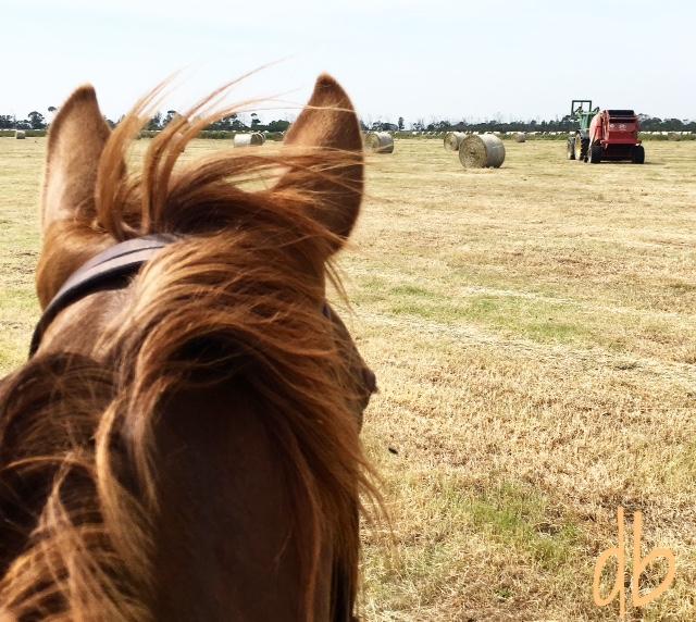 Best view of Hay season here.