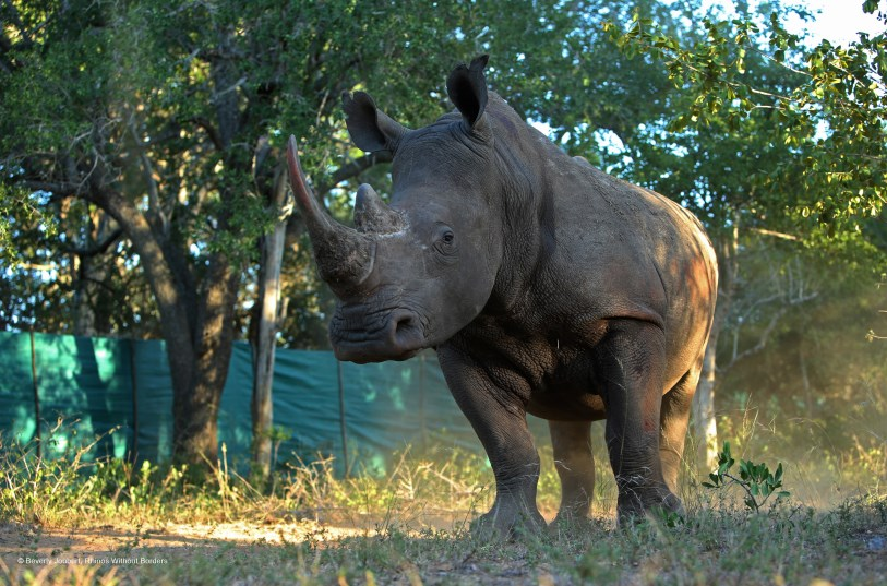 Rhinos_Without_Borders3.jpg