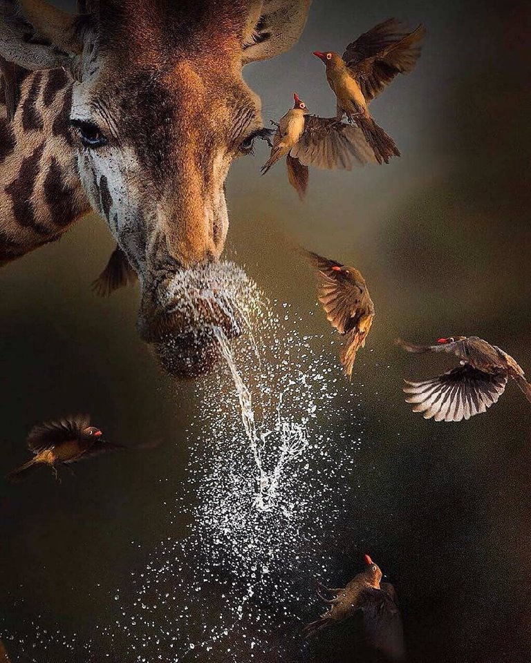 We simply love this photo.  It's always great to see animals living side by side in harmony but this photo conveys this as chaos and drama to make a stunning, dramatic shot.
