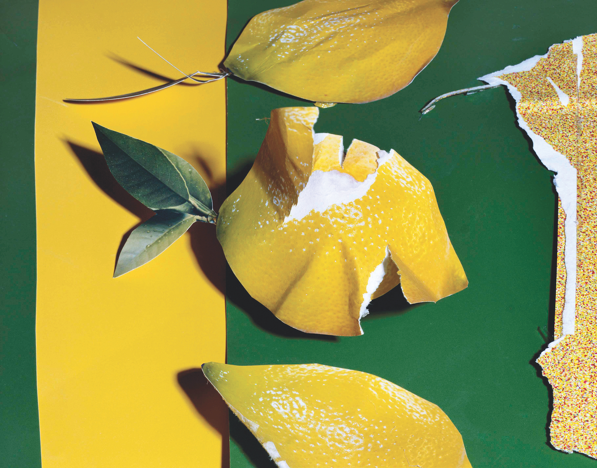 Lemons 2013 C Daniel Gordon copy.jpg