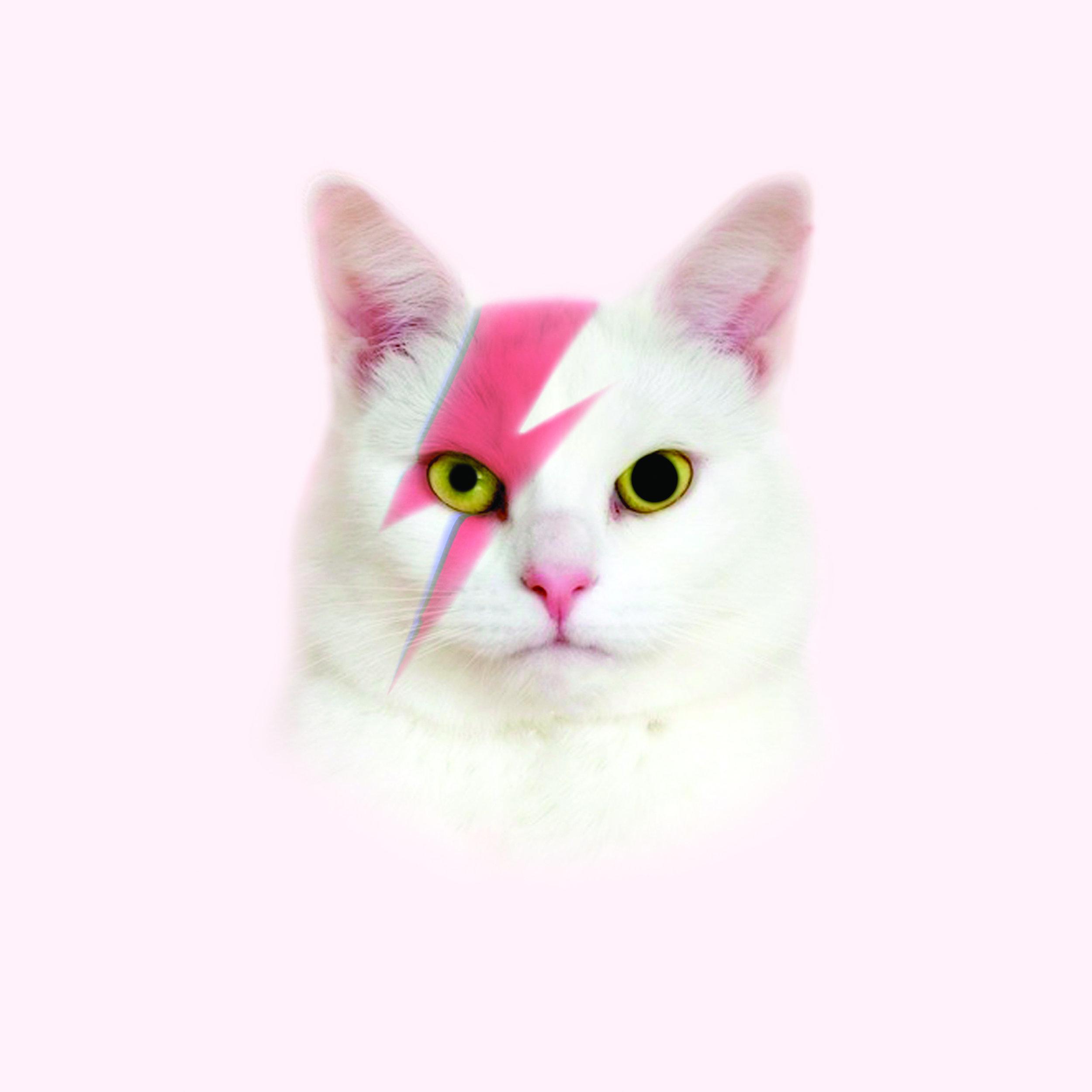 CAT FROM MARS.jpg
