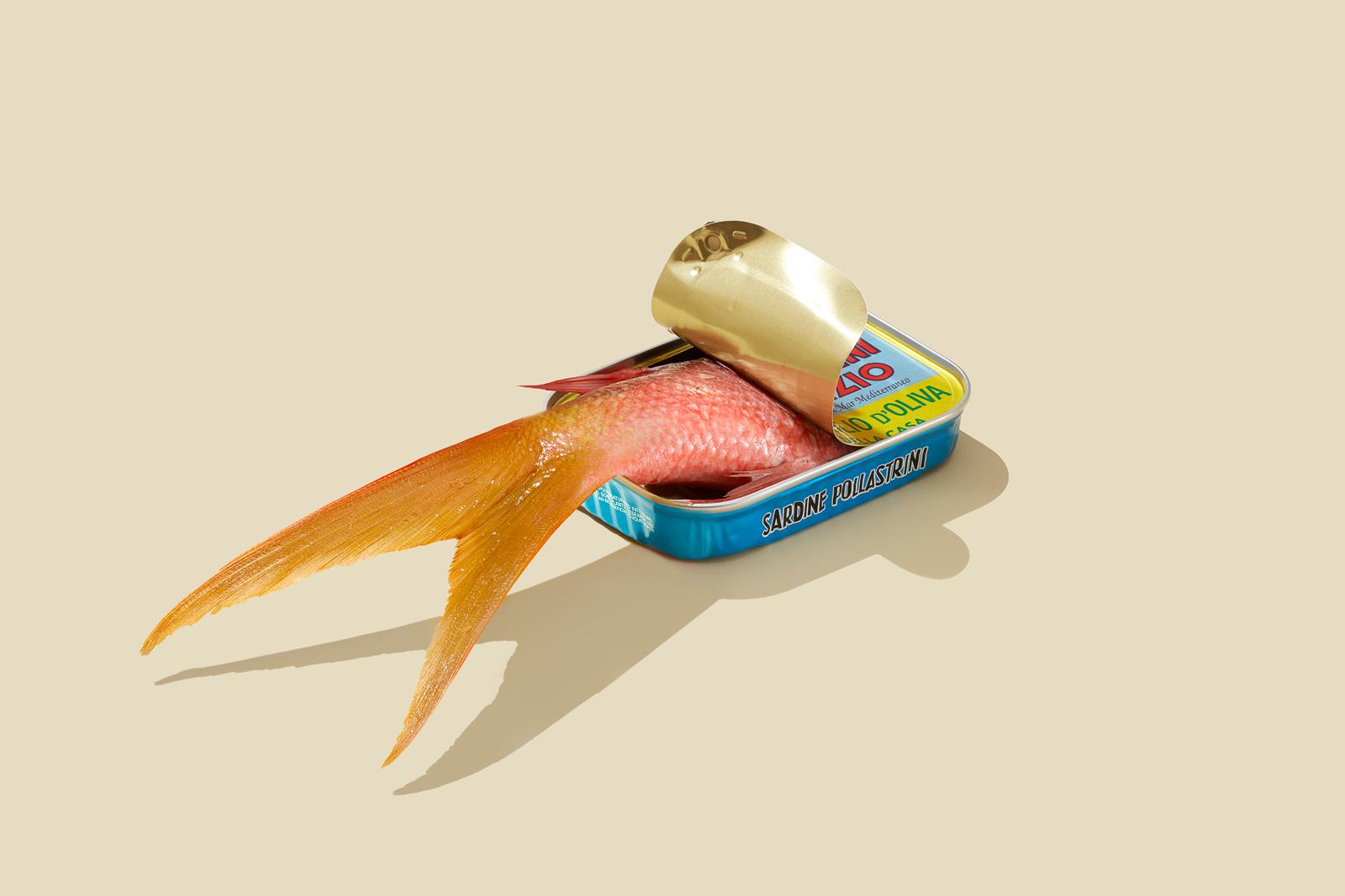 FISH_TAIL_COMBO_YELLOW.jpg