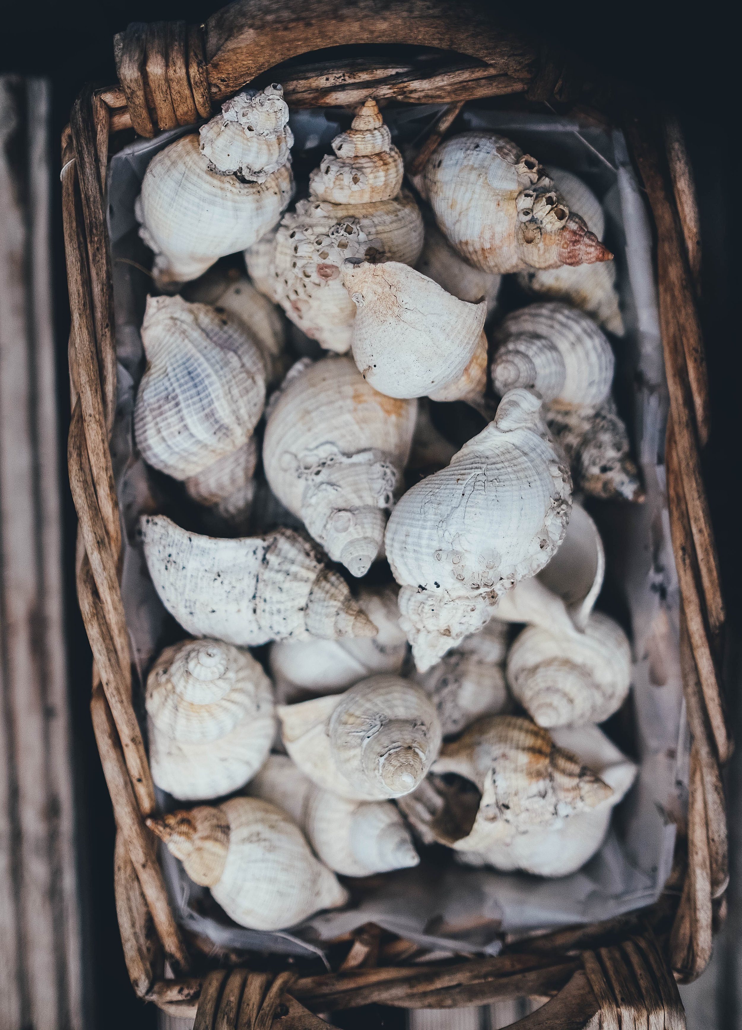 Retreat Florida Blue Mountain Beach Shells.jpg