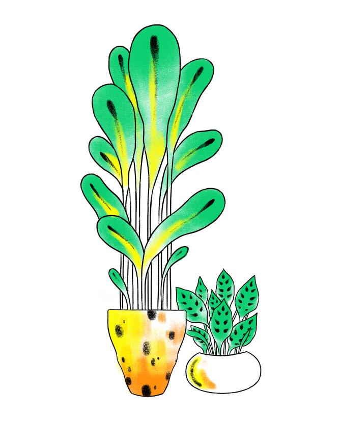 planters_small_670.jpg