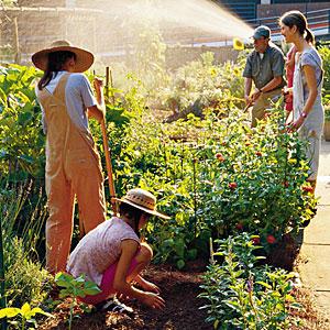 neighborhood-garden-m.jpg