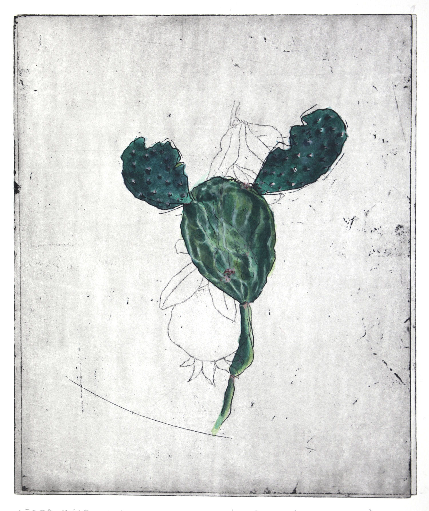 Opuntia ficus-indica