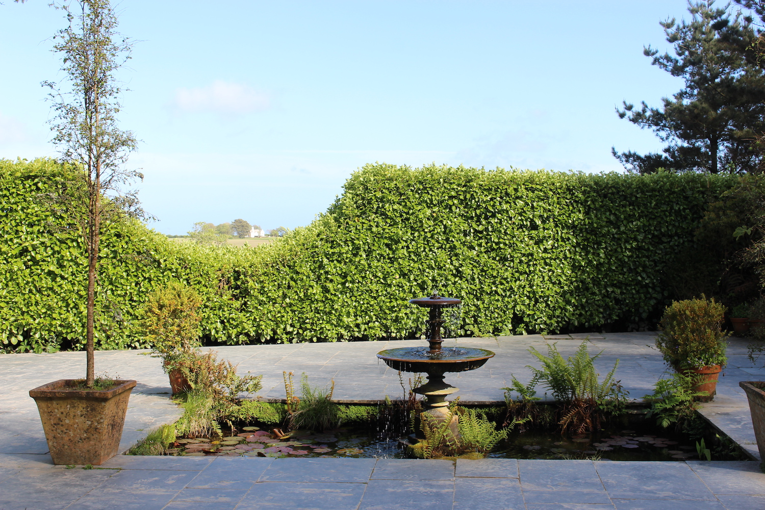 I loved the way the viewing window was cut out of the hedge....