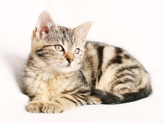 cat-1192026_960_720.jpg