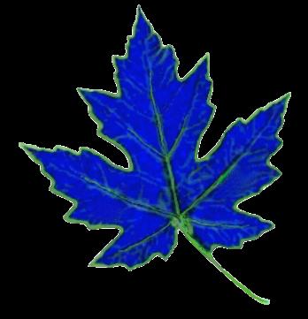 Basic-Logo-vanilla.png