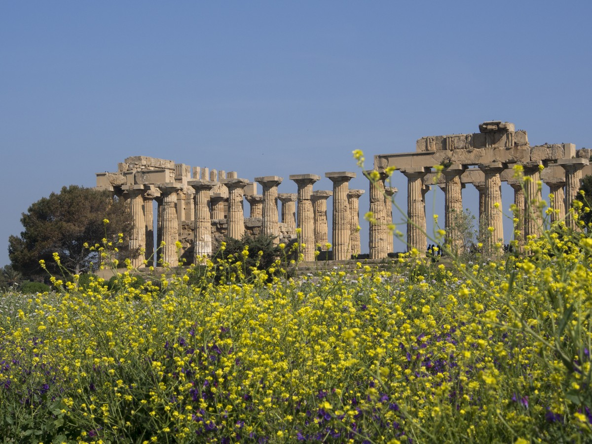 Selinunte_i_blomstring__copy_2015_Sicilia_små_bilder.jpg