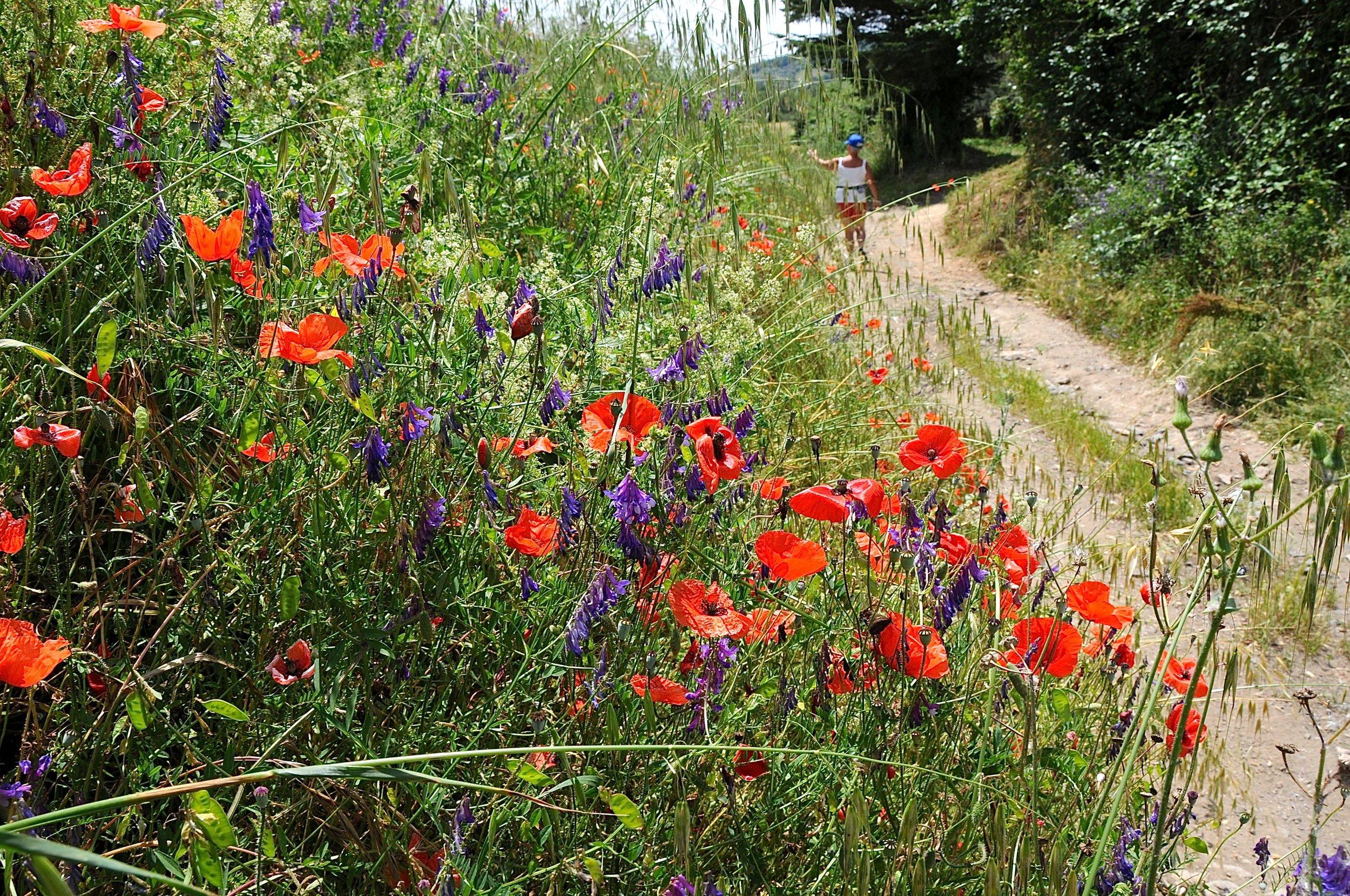 Montefiascone - Viterbo Foto Kjell Helle-Olsen (120).jpg