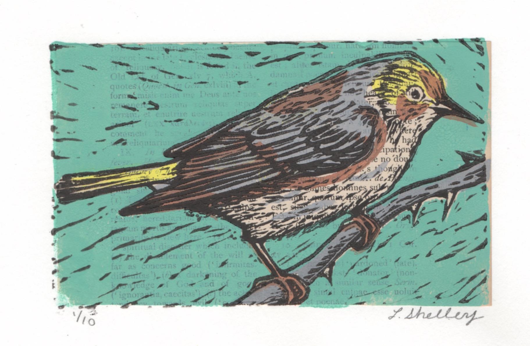 Cape May Warbler.jpeg