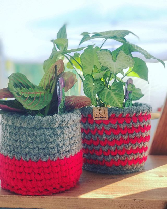 O-H, these plant babies are looking great in their new baskets. (({{And still available}}))