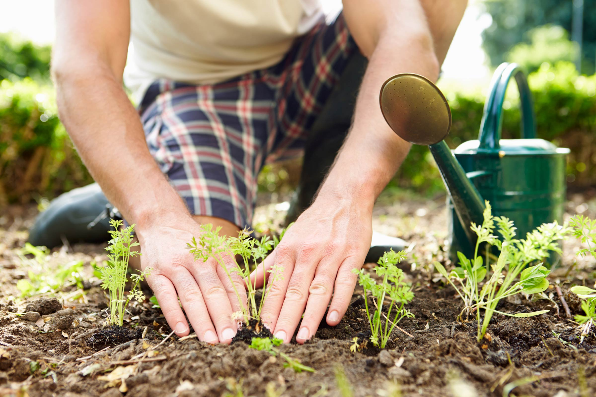 Plant a community garden -