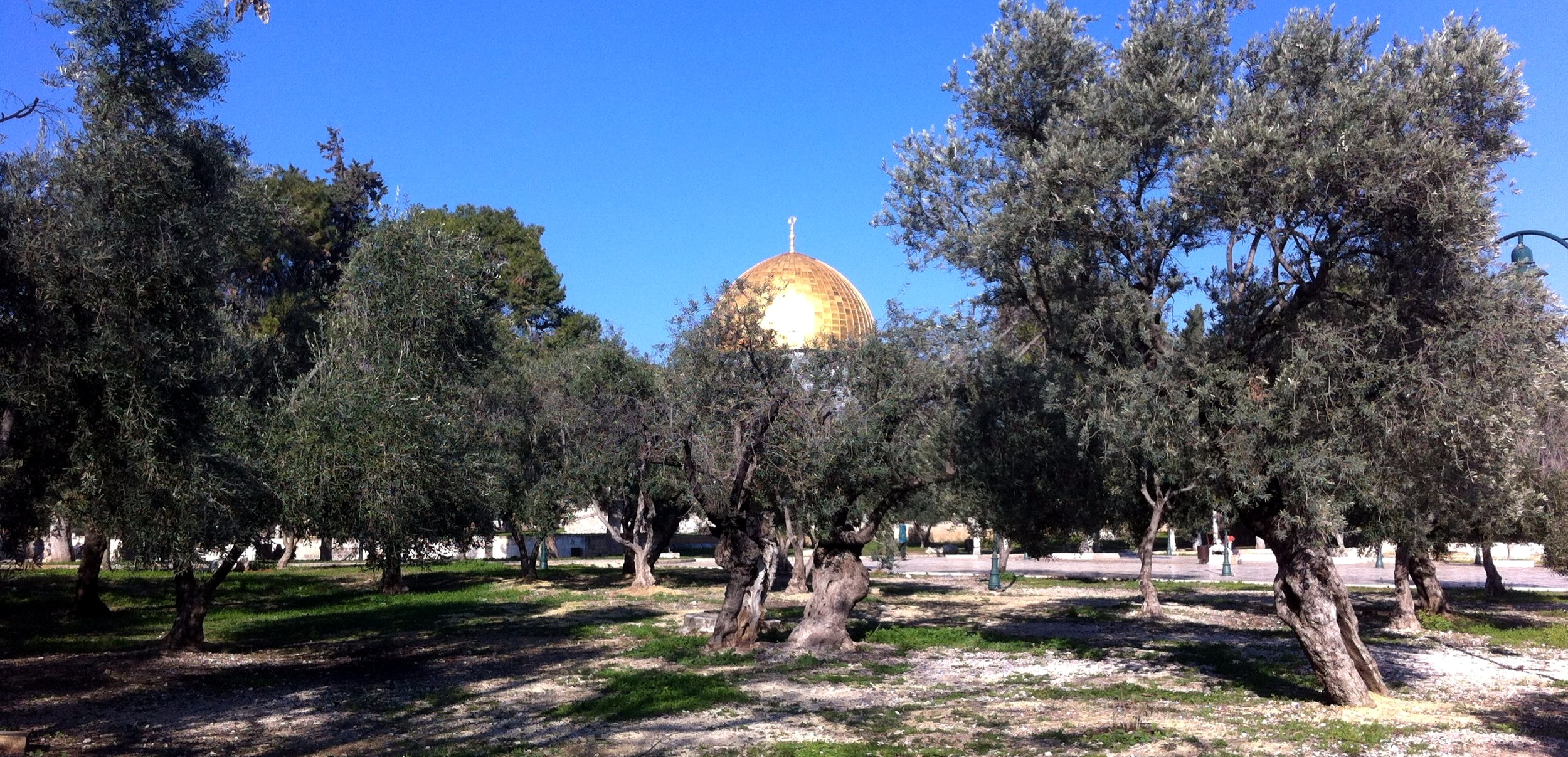 Wind between trees. Dome of the Rock, Haram asch-Scharif/Temple mount, Jerusalem, Israel, 2015.