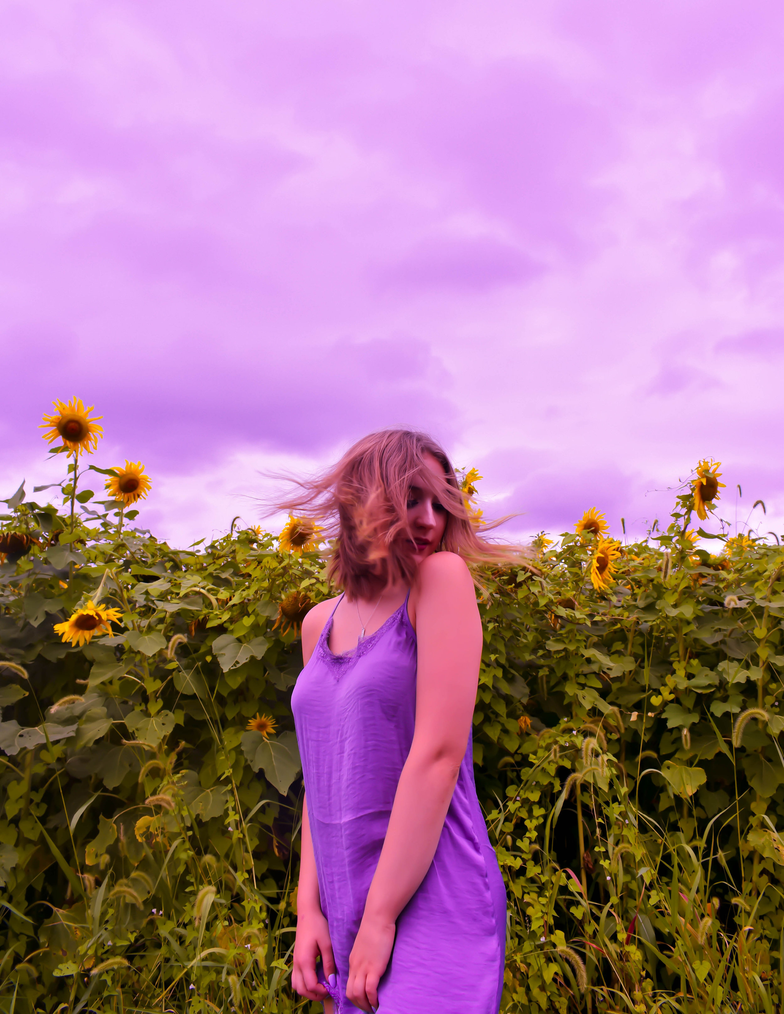 mere purple.jpg