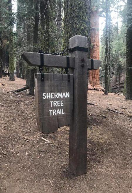 Sherman tree trail.jpg