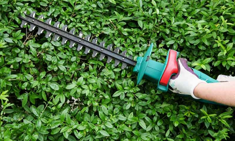 Electronic hand held bush trimmer cutting bush, by Delaware landscape company.