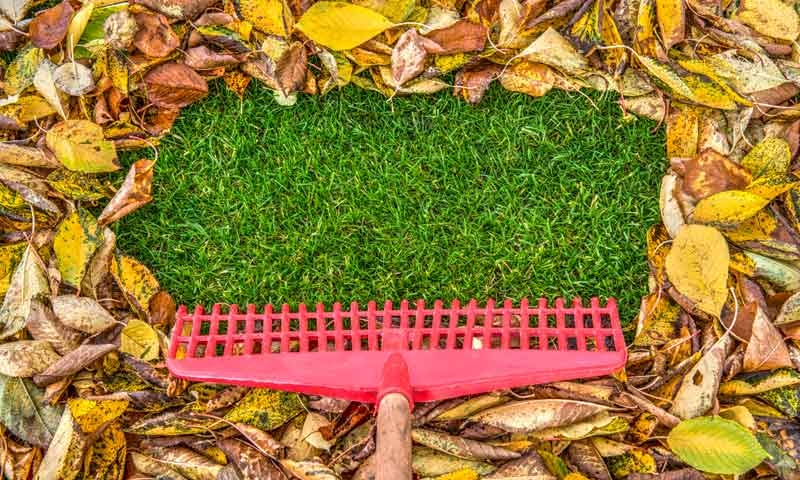 Rake raking leaves to reveal green grass underneath, Lawn care maintenance by Ivanoff Lawn Care and Landscape.