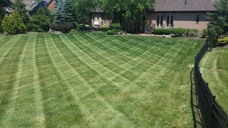 Freshly mowed backyard of home, part of lawn care maintenance by Ivanoff.