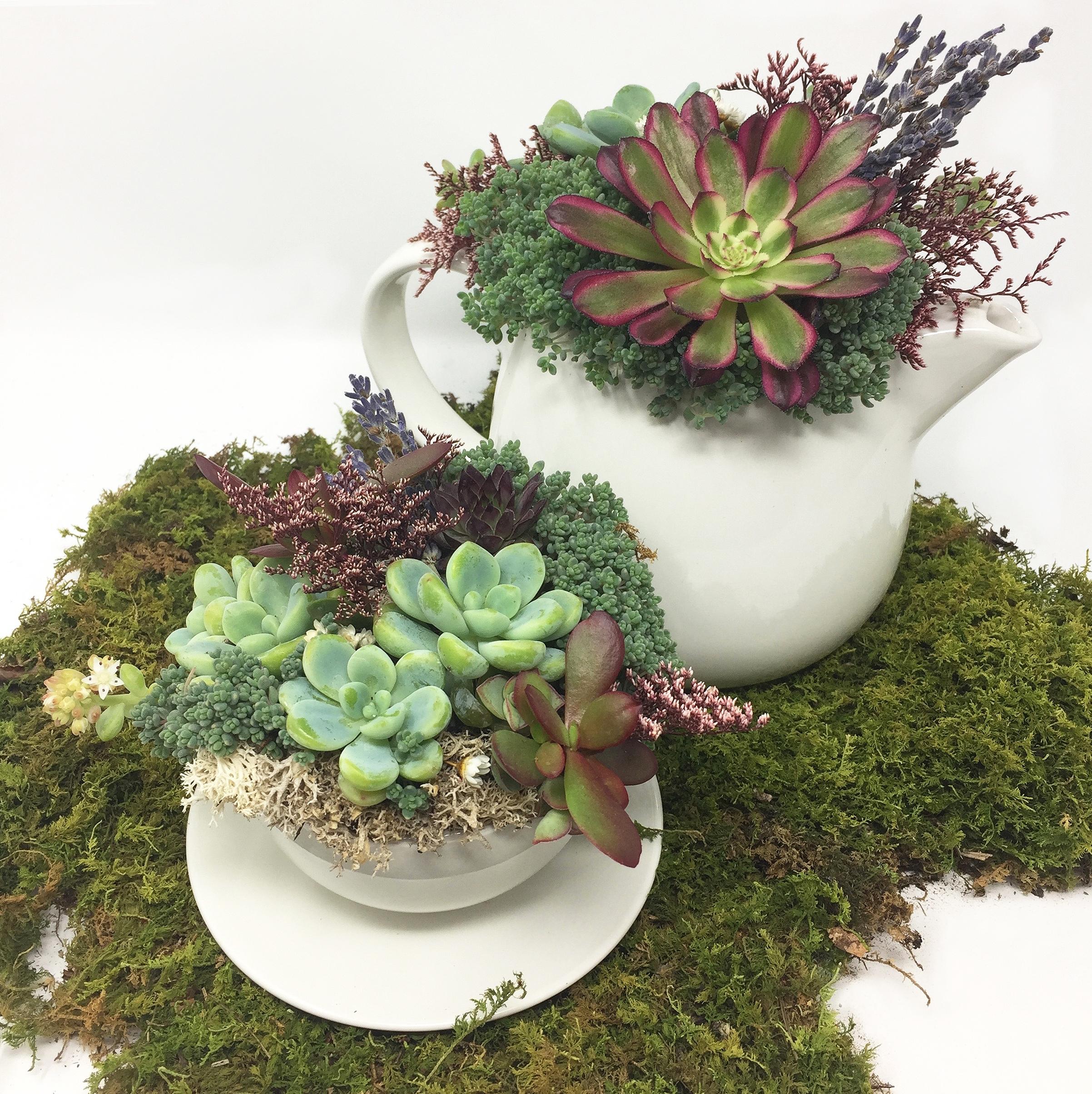 Teapot Succulent 6.jpg