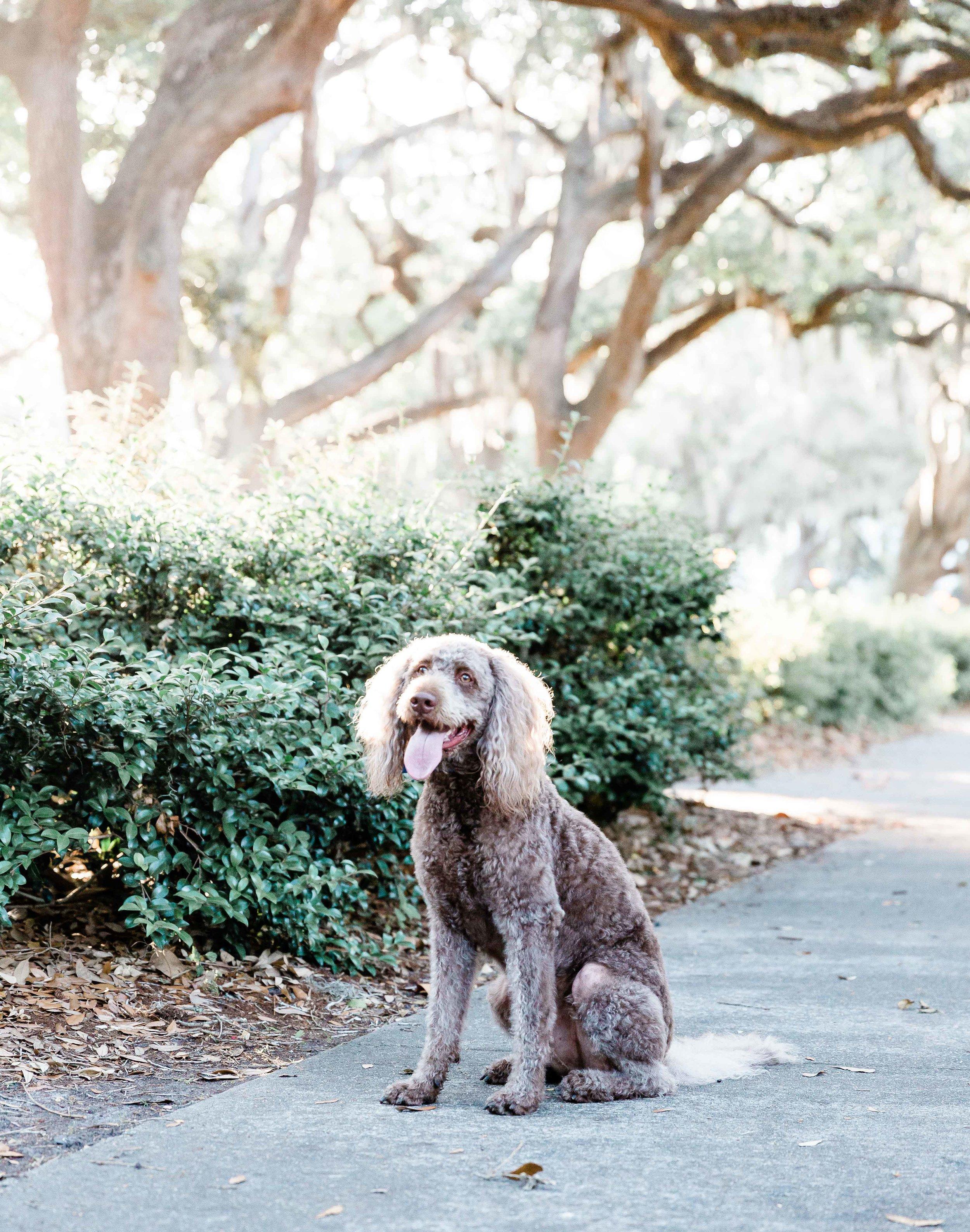 20190519Georgia-Savannah-Kristen & Zach-Forsyth Park-Lafayette Square09.jpg