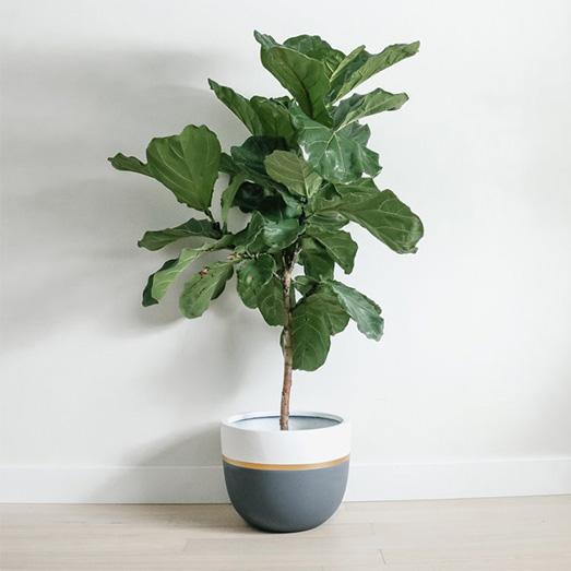 Grey White + Gold Planter | Pot | Indoor & Outdoor Modern Lightweight Hand Painted Planters.jpg