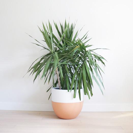 Matte Terracotta Planter | Pot | Indoor & Outdoor Modern Lightweight Hand Painted Planters.jpg