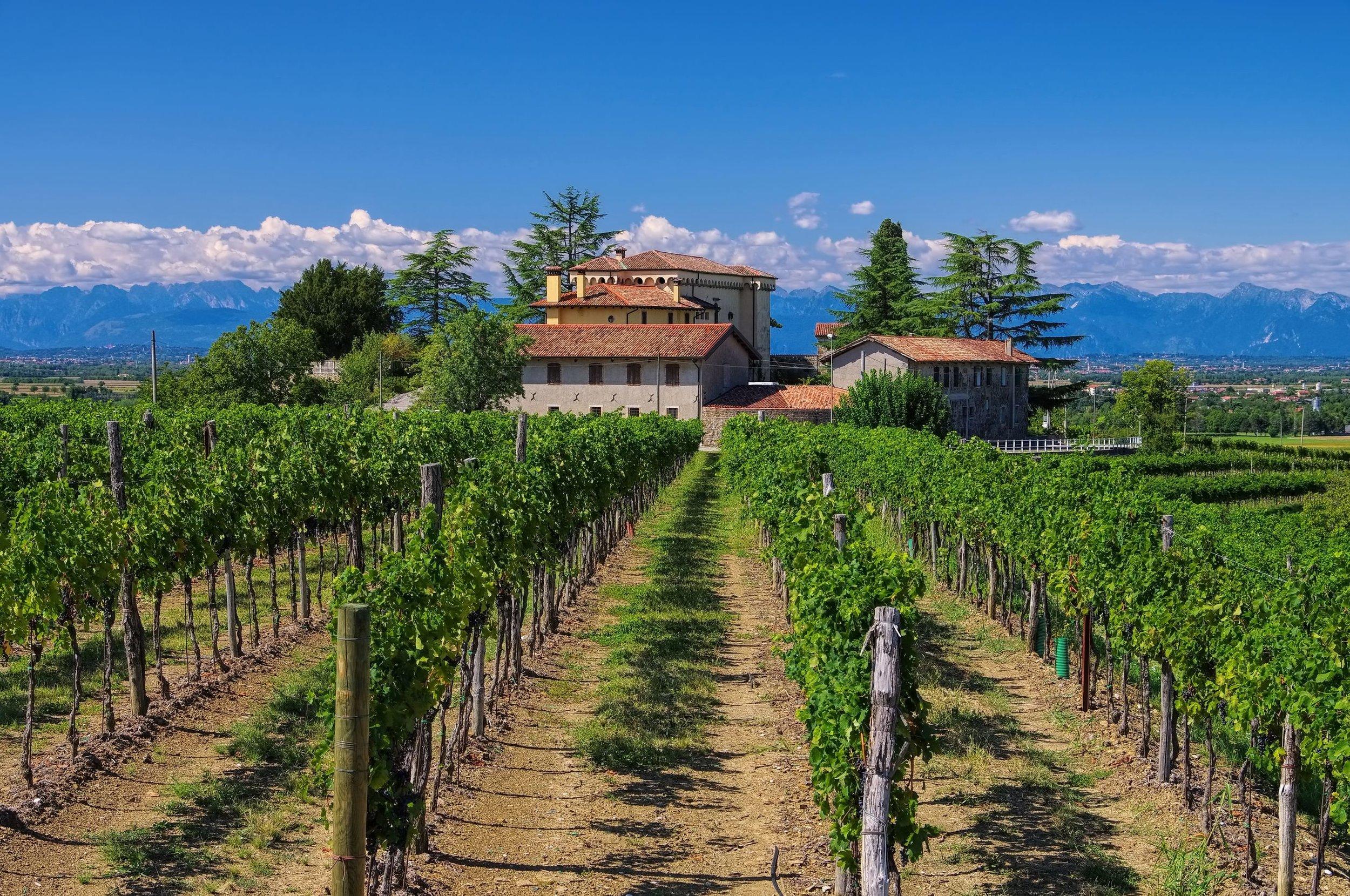Friuli-vineyards.jpg