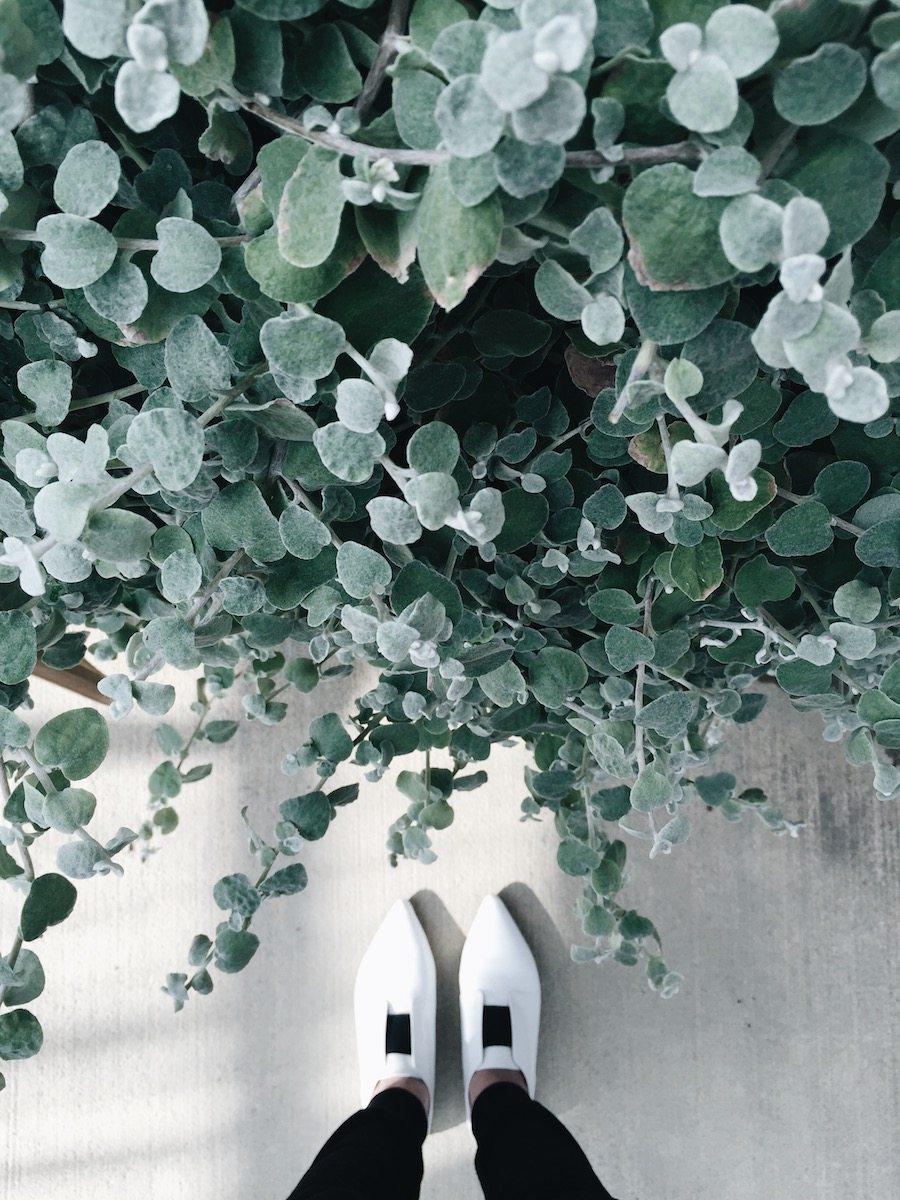 Nana-Greenhouse.jpg