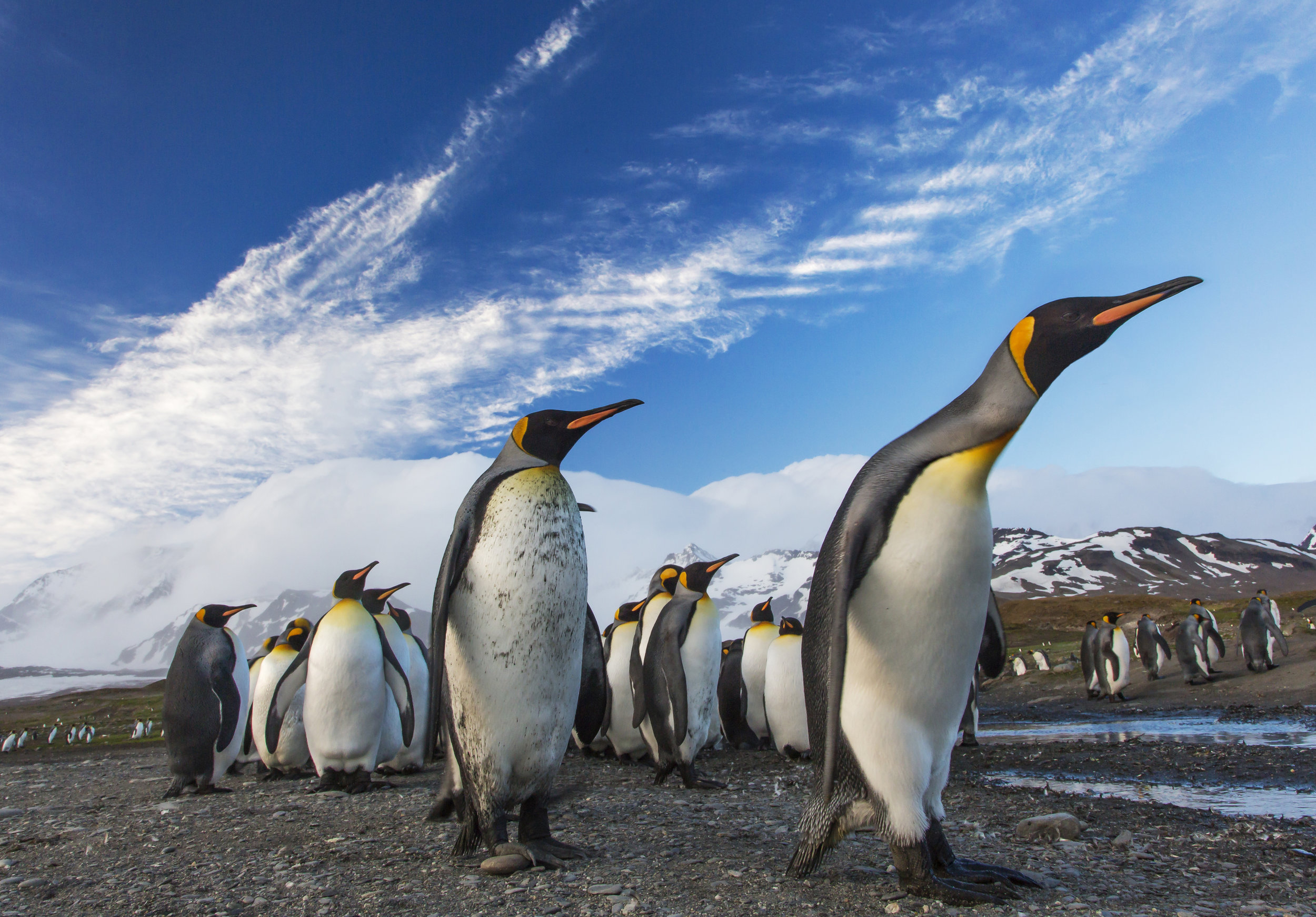 Discover Antarctica - 11 days from $7,460*pp (NZD)Sale ends: 31 Dec 2020Travel Period: 4 Nov 2020 - 24 Feb 2021