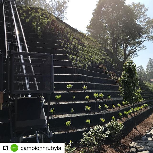 Yet another inspiration from design partner Kevin Campion.  Challenge? Never.  Planting acrobatics on a foggy morning on the Severn River in Annapolis @campionhrubyla #dclandscapes #mdasla
